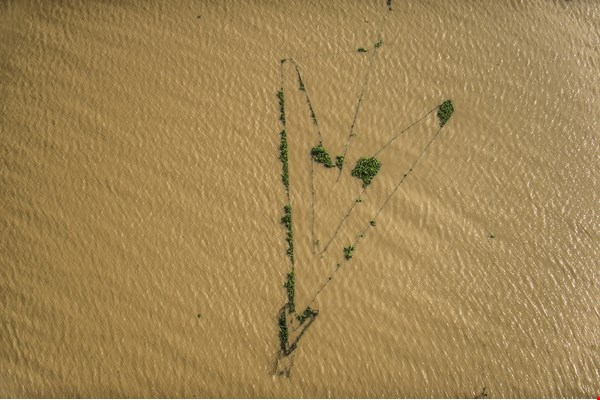 n shallow parts of Tonlé Sap Lake, arrow-shaped fish traps are anchored to the muddy bottom with wood or bamboo.