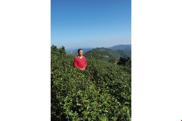 "Tea farmer Yu Sanhe, who practices natural farming methods, says he doesn't ""grow"" tea, but merely maintains the environment."