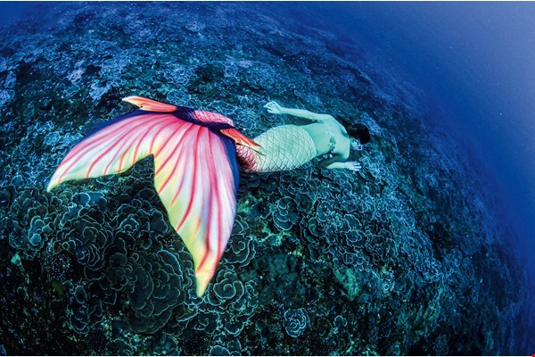 "While campaigning to block the construction of a power plant at Shen'ao in New Taipei City's Ruifang District, Wang Ming-hsiang hired six ""mermaids"" to swim through the unique scenery of the ""rose coral garden,"" in hopes that more people will join in the effort to preserve the seabed ecology."