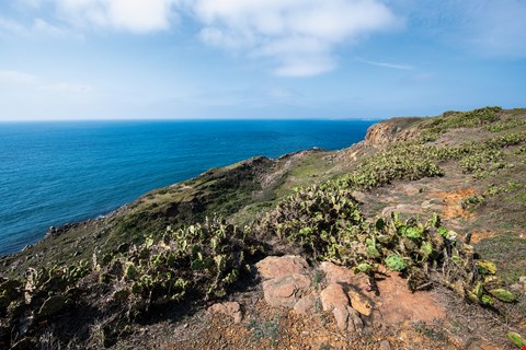 A broad swathe of prickly pear cactuses growing on the Wai'an Headland on Penghu's Xiyu Island. (photo by Kent Chuang)